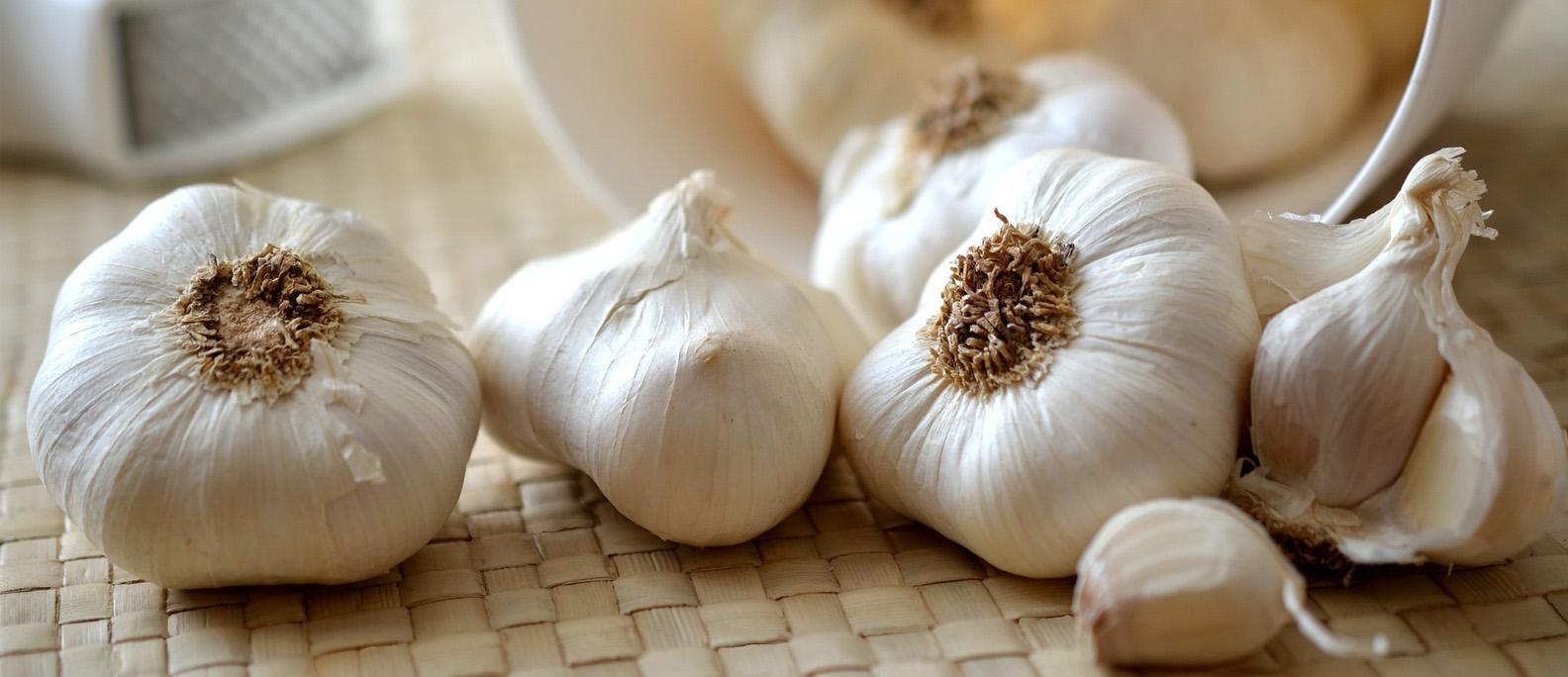 Shop Garlic